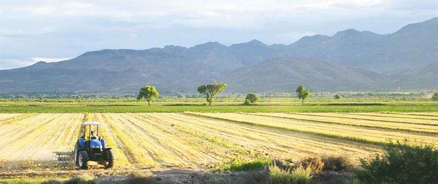 Investir en terres agricoles ?