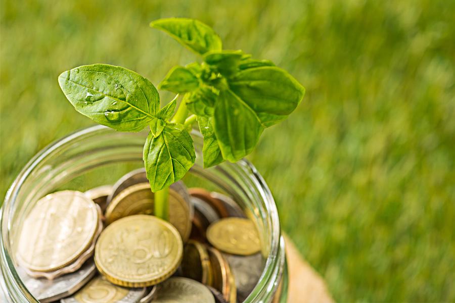 Vie Plus Impact : M&M Finance Conseil vous accompagne dans la transition écologique